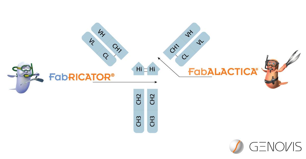 2019-NL3-FabRICATOR-FabALACTICA
