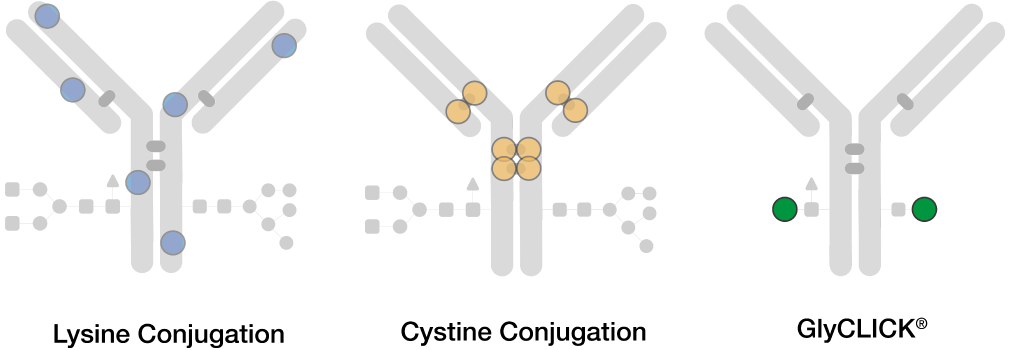 Antibody Conjugation fig1