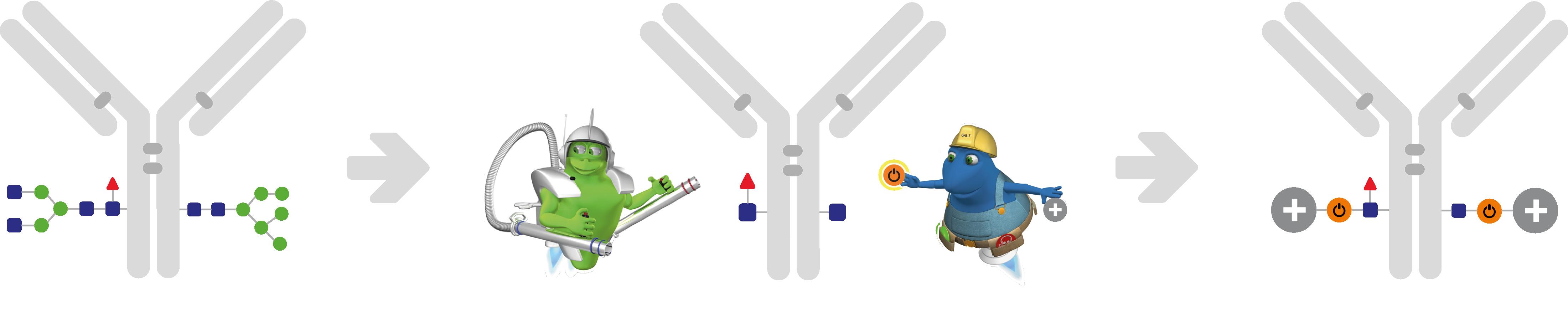 Antibody conjugation - Glyclick Workflow