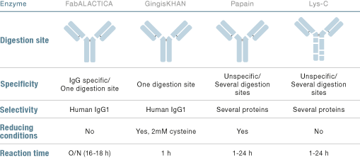 Intact Fab and Fc Generation with FabALACTICA or GingisKHAN