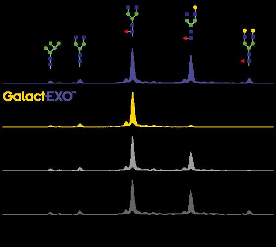 three different β-galactosidases GalactEXO