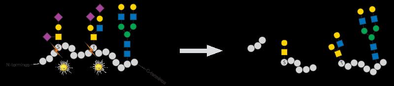 Glycosylation OpeRATOR