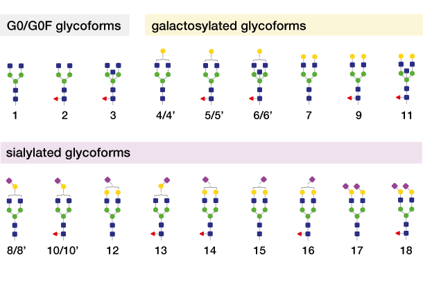 galactosidase for Released Glycan Trimming