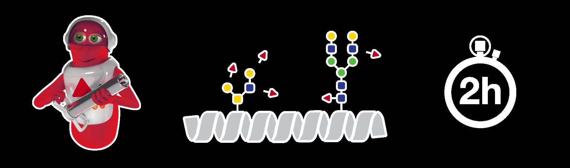 FucosEXO workflow